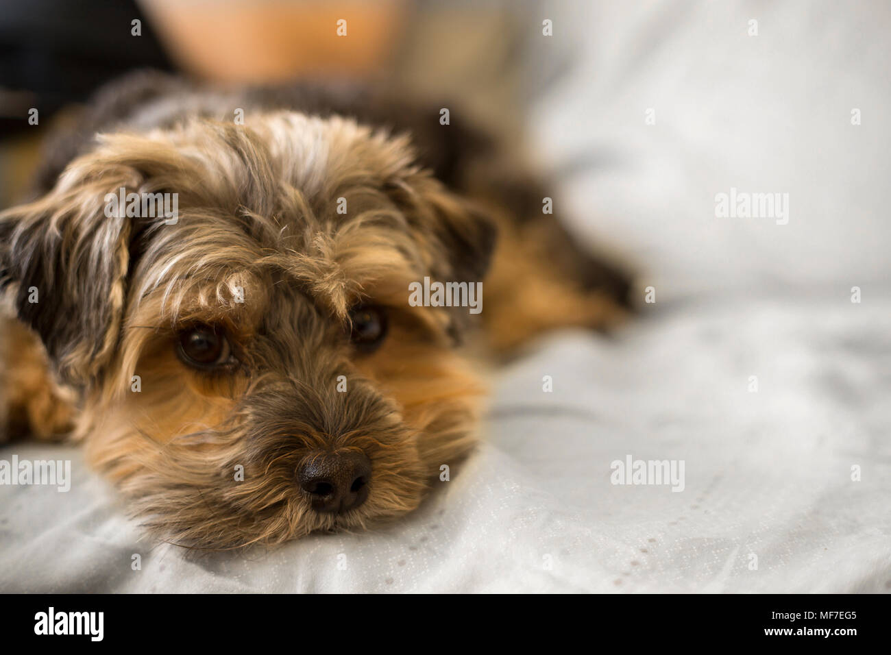 Adorable And Beautiful Images Of Cute Dogs Stock Photo Alamy
