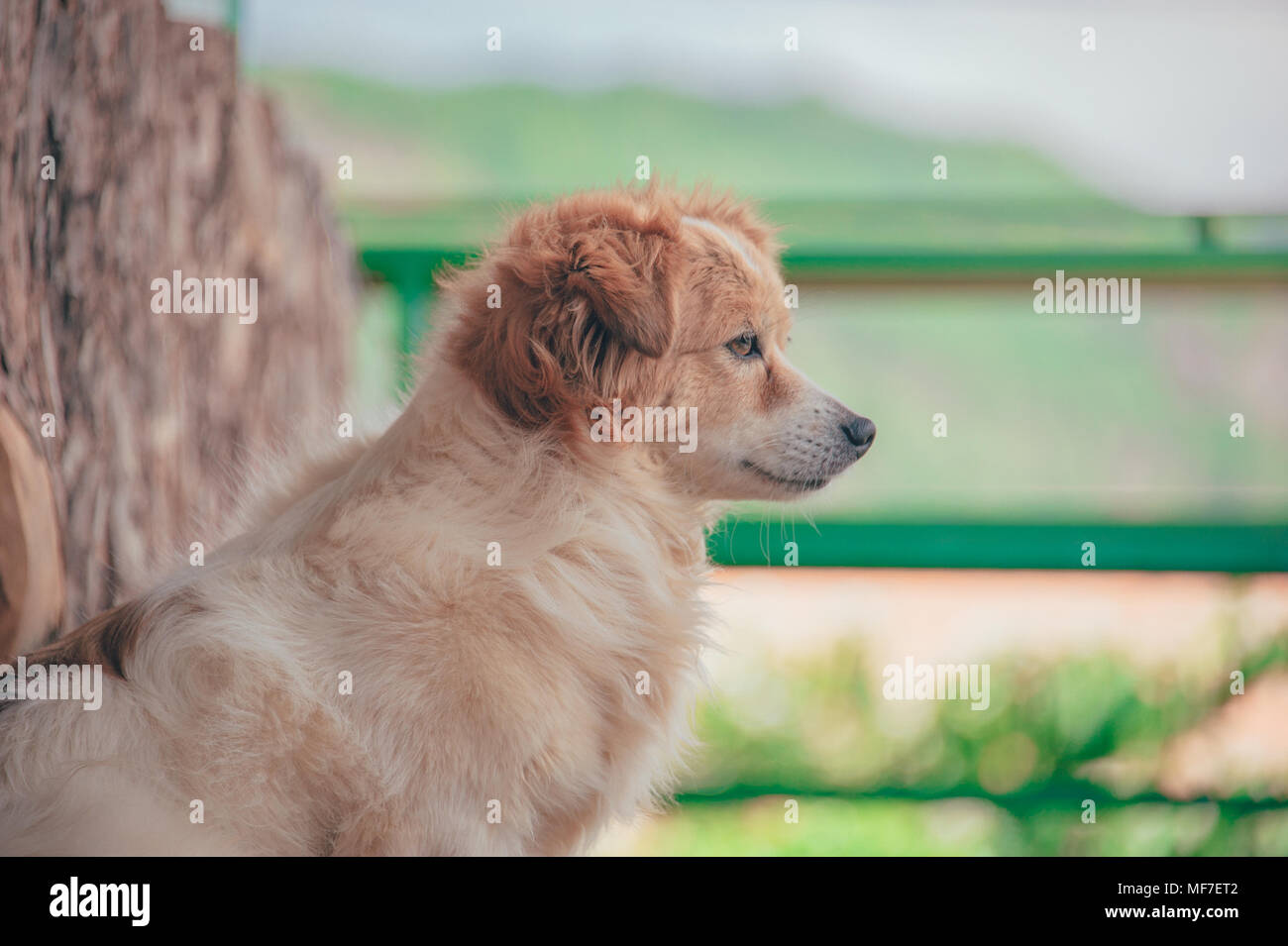 adorable and beautiful images of cute dogs - Stock Image