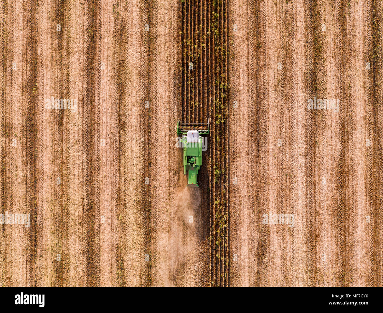 Combine harvester on a field of wheat, aerial view. - Stock Image
