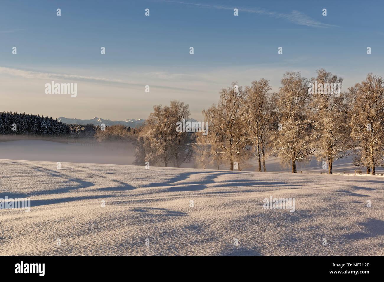 Morgenstimmung, Winterlandschaft bei Schwaigwall, Geretsried, Oberbayern, Bayern, Deutschland Stock Photo