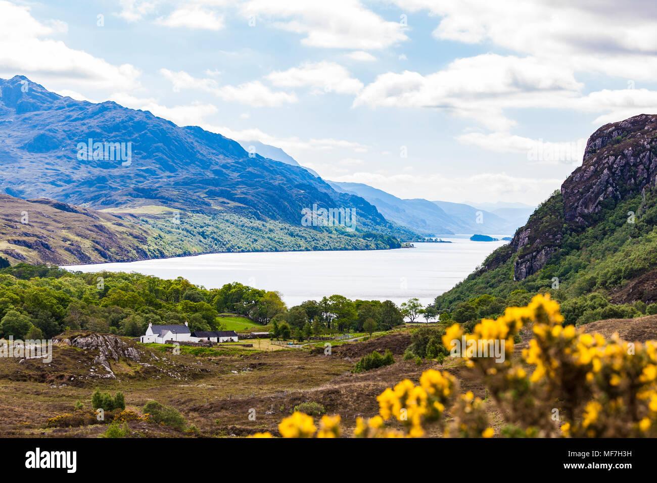 United Kingdom, Scotland, Highland, Loch Maree, freshwater lake, farmhouse - Stock Image