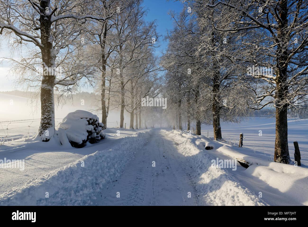 verschneiter Waldweg, Winterlandschaft bei Schwaigwall, Geretsried, Oberbayern, Bayern, Deutschland Stock Photo