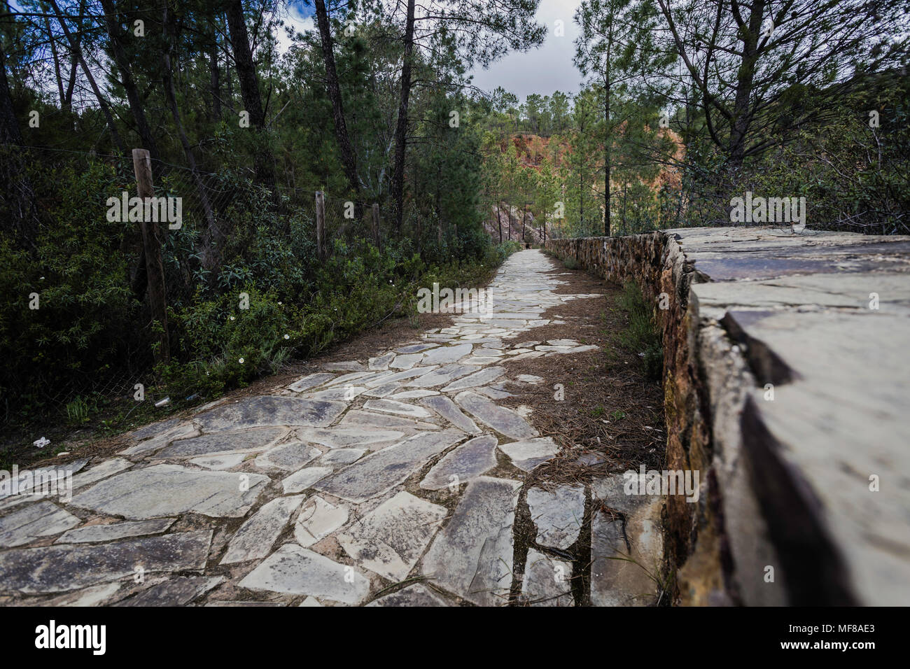 Stone path in the forest - Stock Image