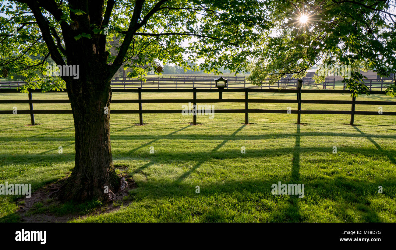 Backyard Living - sitting on the back porch gazing into the light as the sun starts to set. - Stock Image