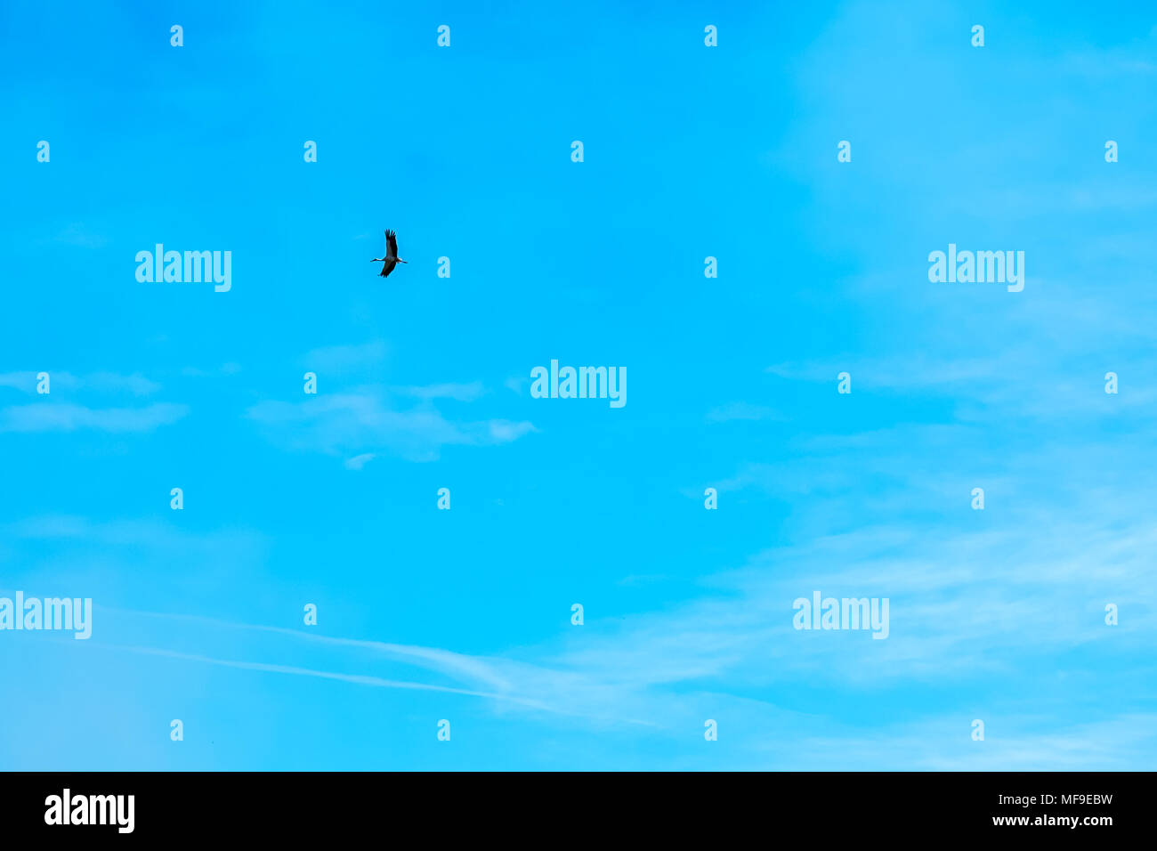 White stork flying in deep blue sky. Cloudscape. Natural abstract background. - Stock Image