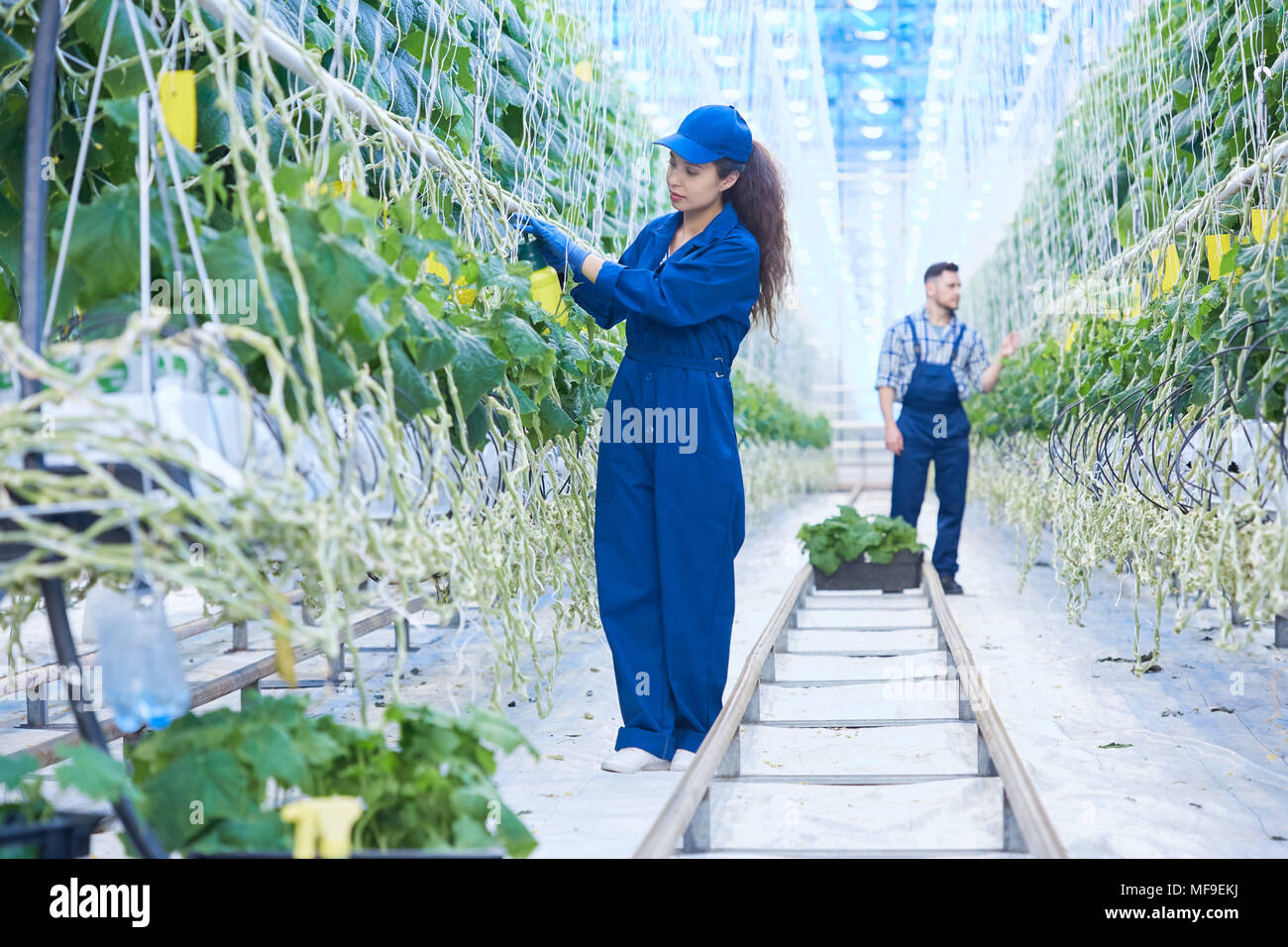 Two Workers on Plantation - Stock Image
