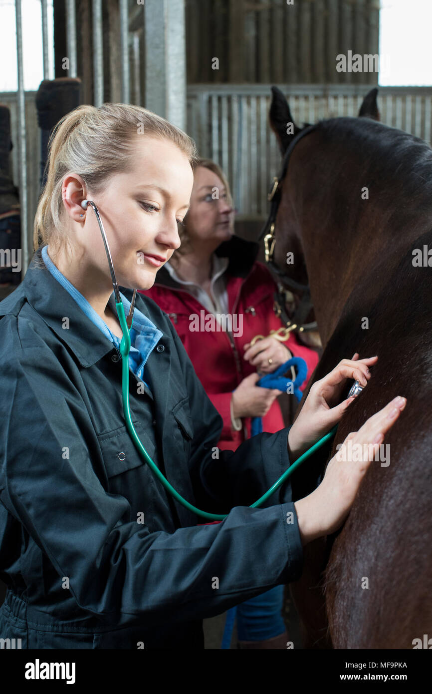 Female Vet Giving Medical Exam To Horse In Stable - Stock Image