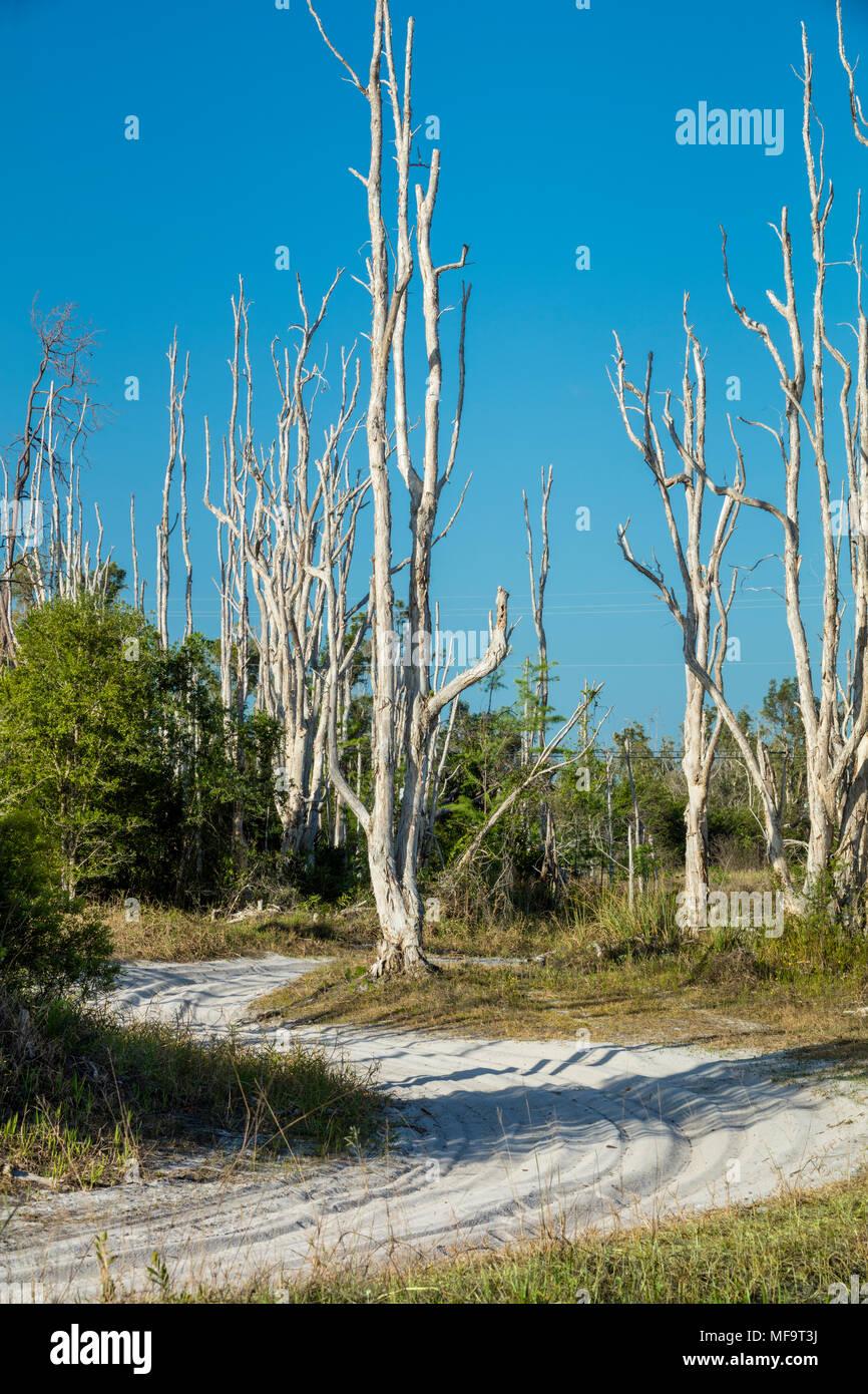The CREW Flint Pen Strand of Florida's WEA (Wildlife and Environmental Area), Bonita Springs, Florida, USA - Stock Image