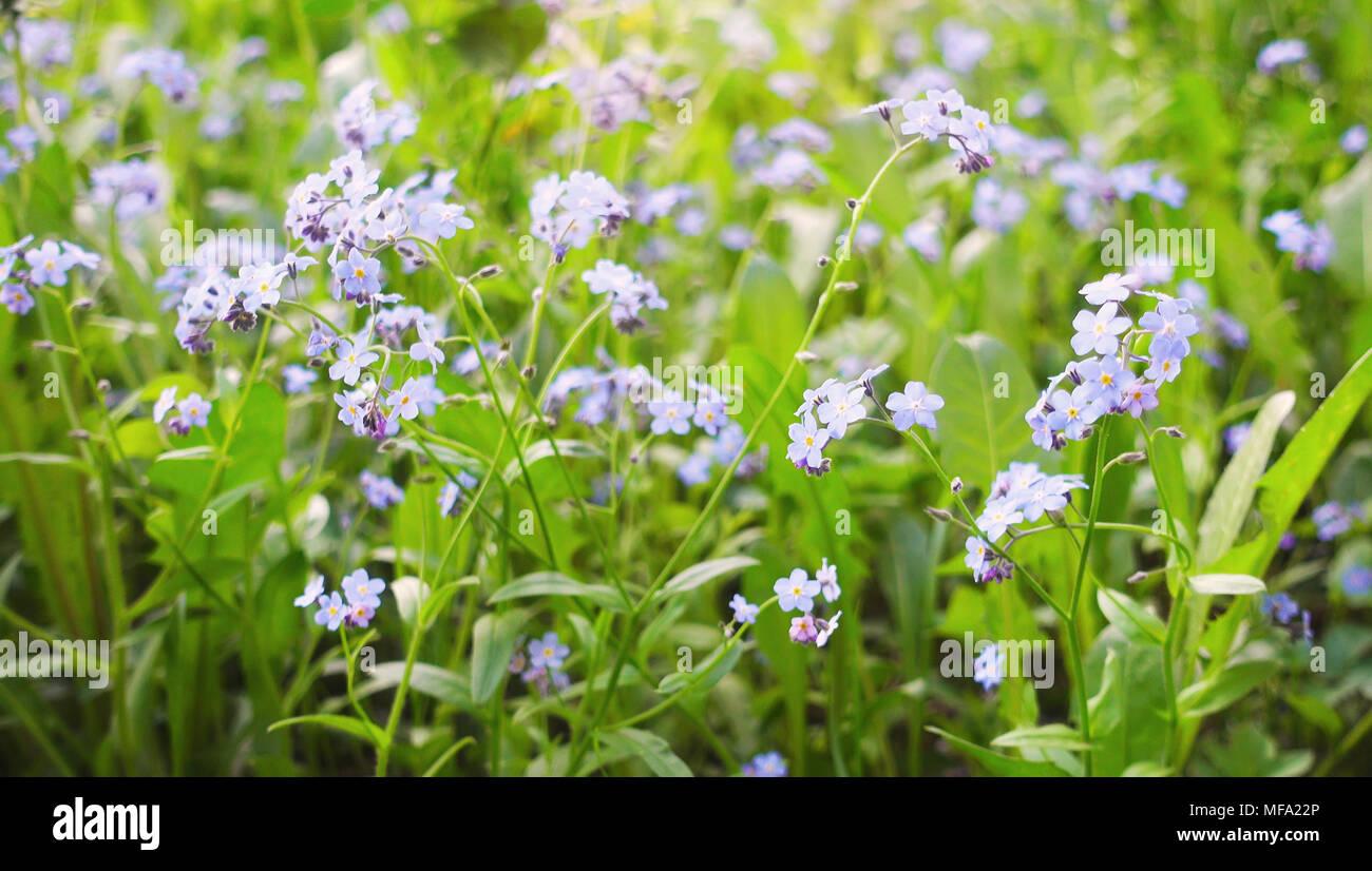 Beautiful wild flowers in summer field flower field at beautiful beautiful wild flowers in summer field flower field at beautiful day izmirmasajfo