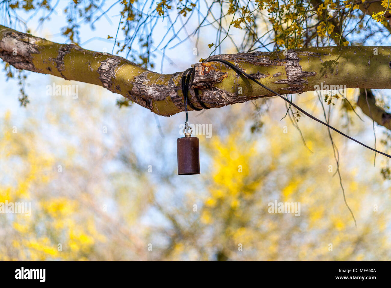 hanging string lights in branches in the desert - Stock Image