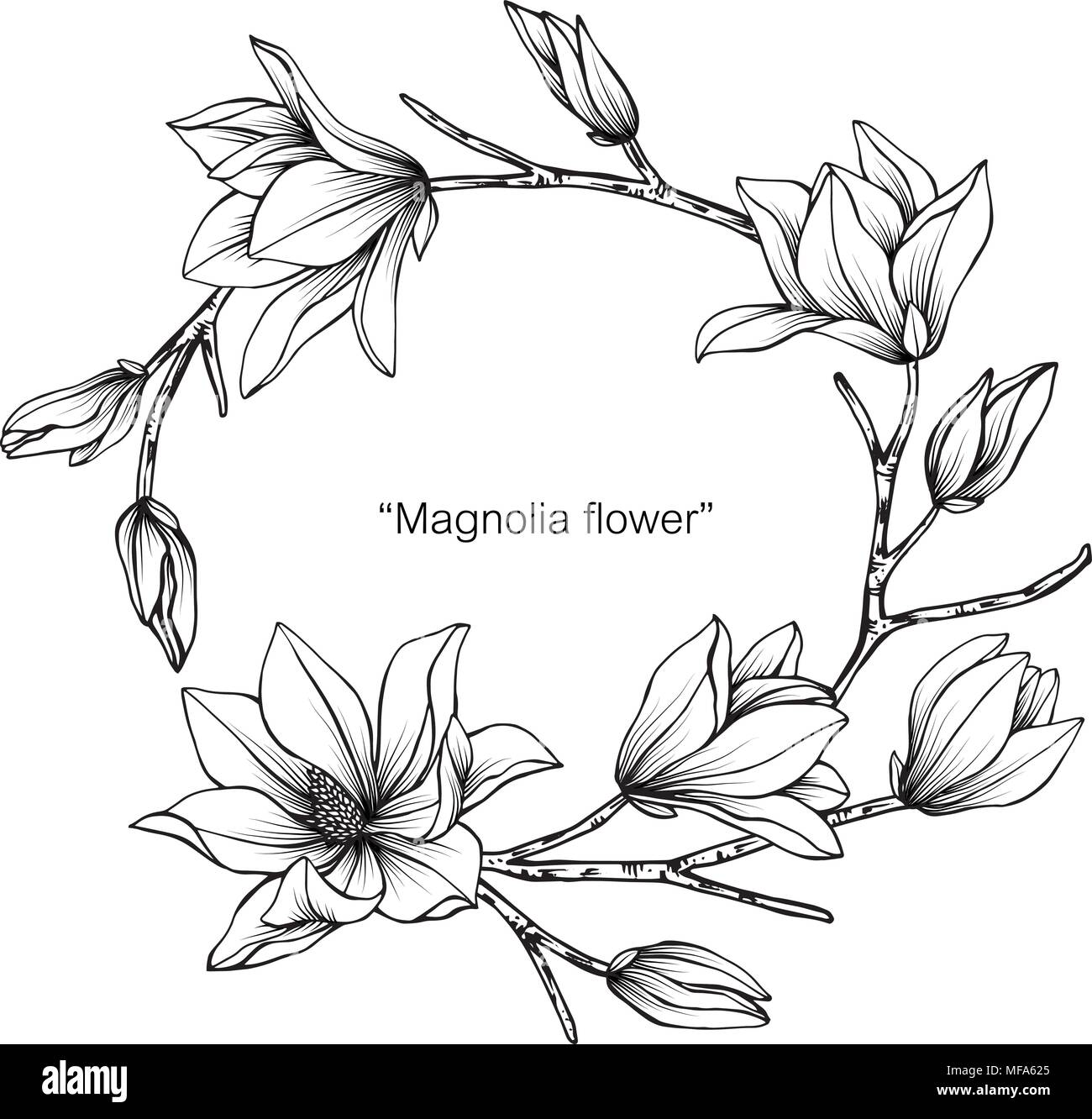 Magnolia Flower Line Drawing : Magnolia flower frame drawing illustration for invitation