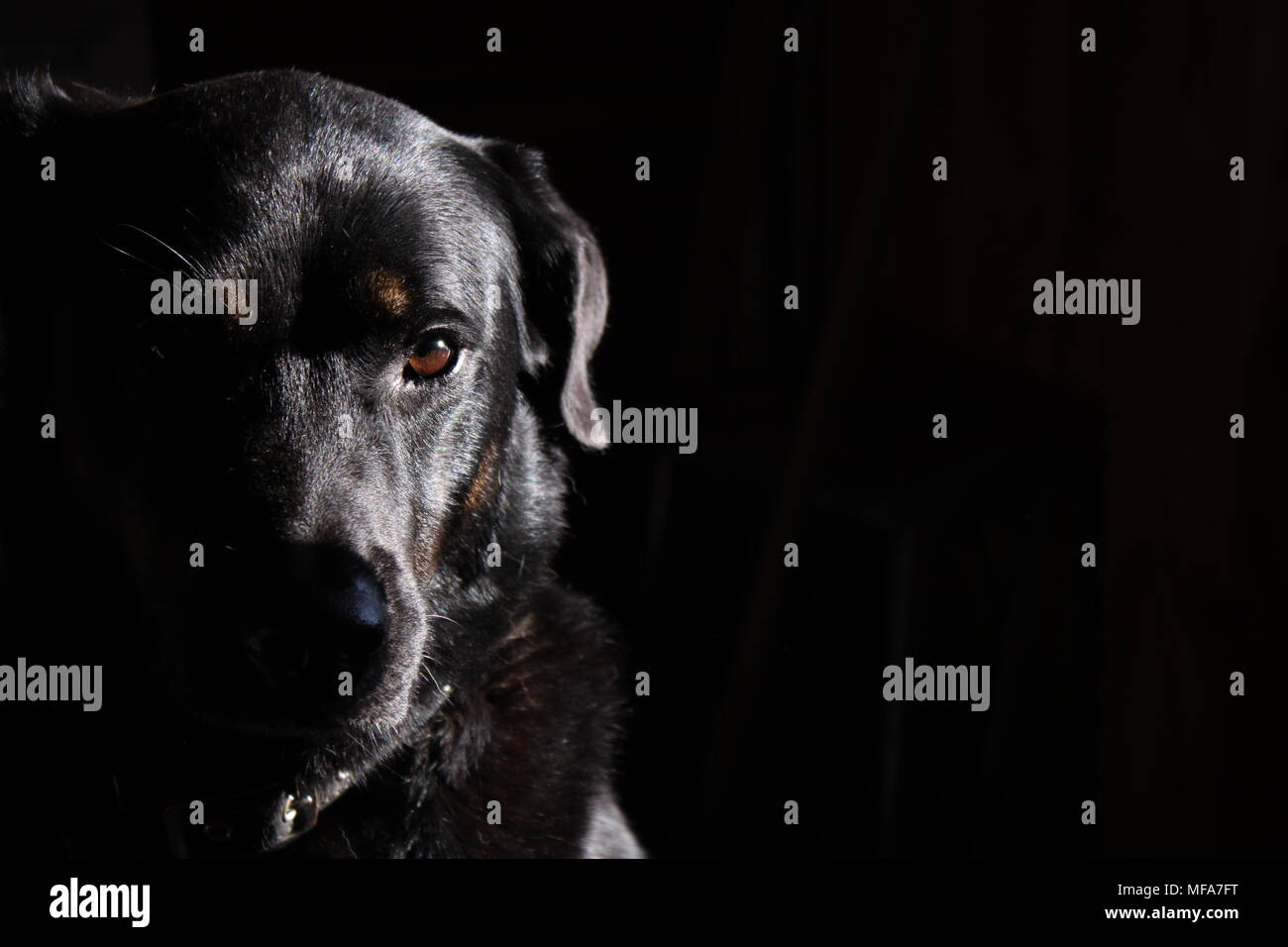 This Photo was shot in a complete colden ancle.The Dogs emotion was catched perfectly. The Dark and Bright parts of the Picture represent the higlight - Stock Image