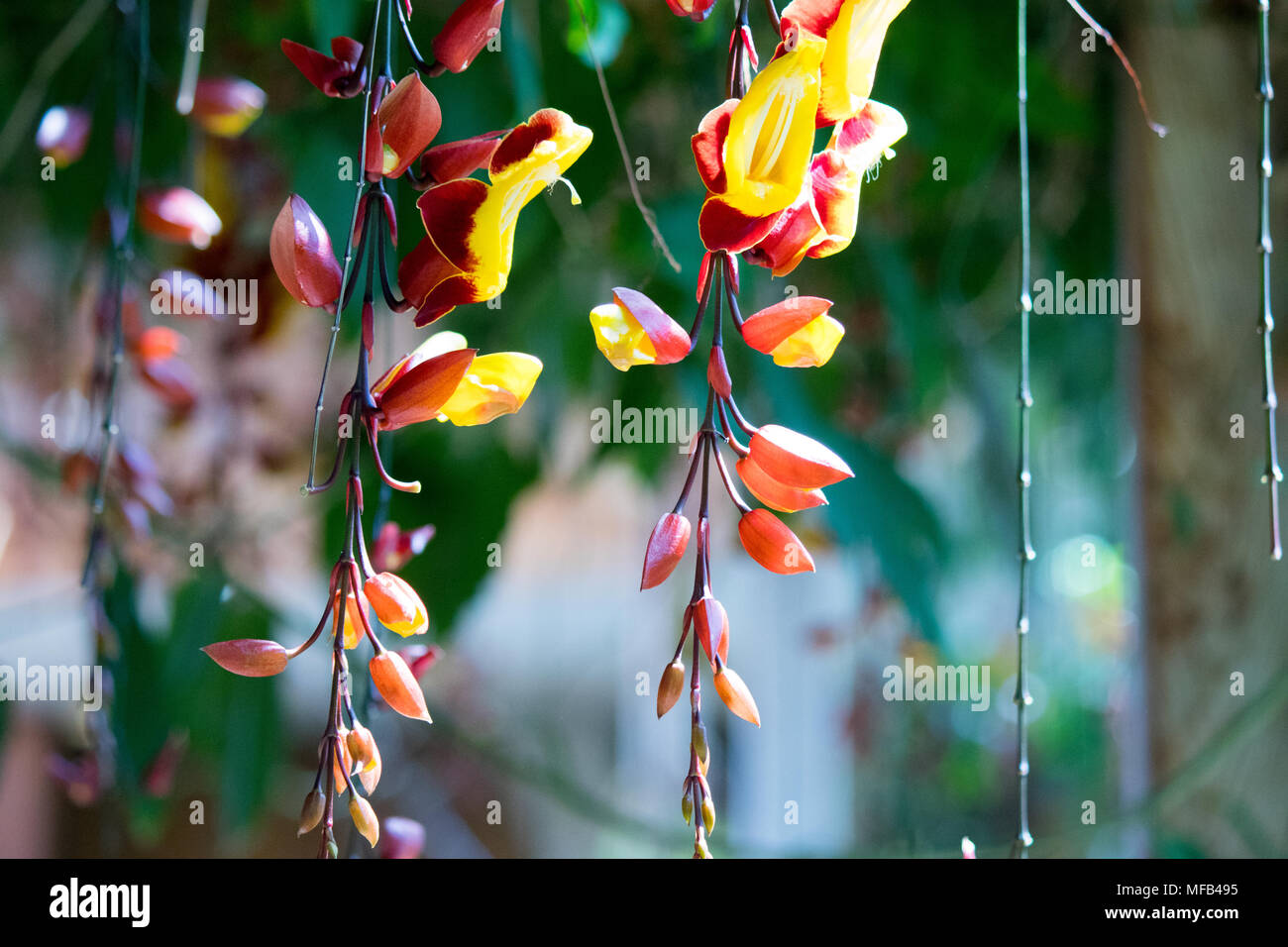 Exotic flower cultivation stock photos exotic flower cultivation beautiful wild tropical flower stock image izmirmasajfo Images