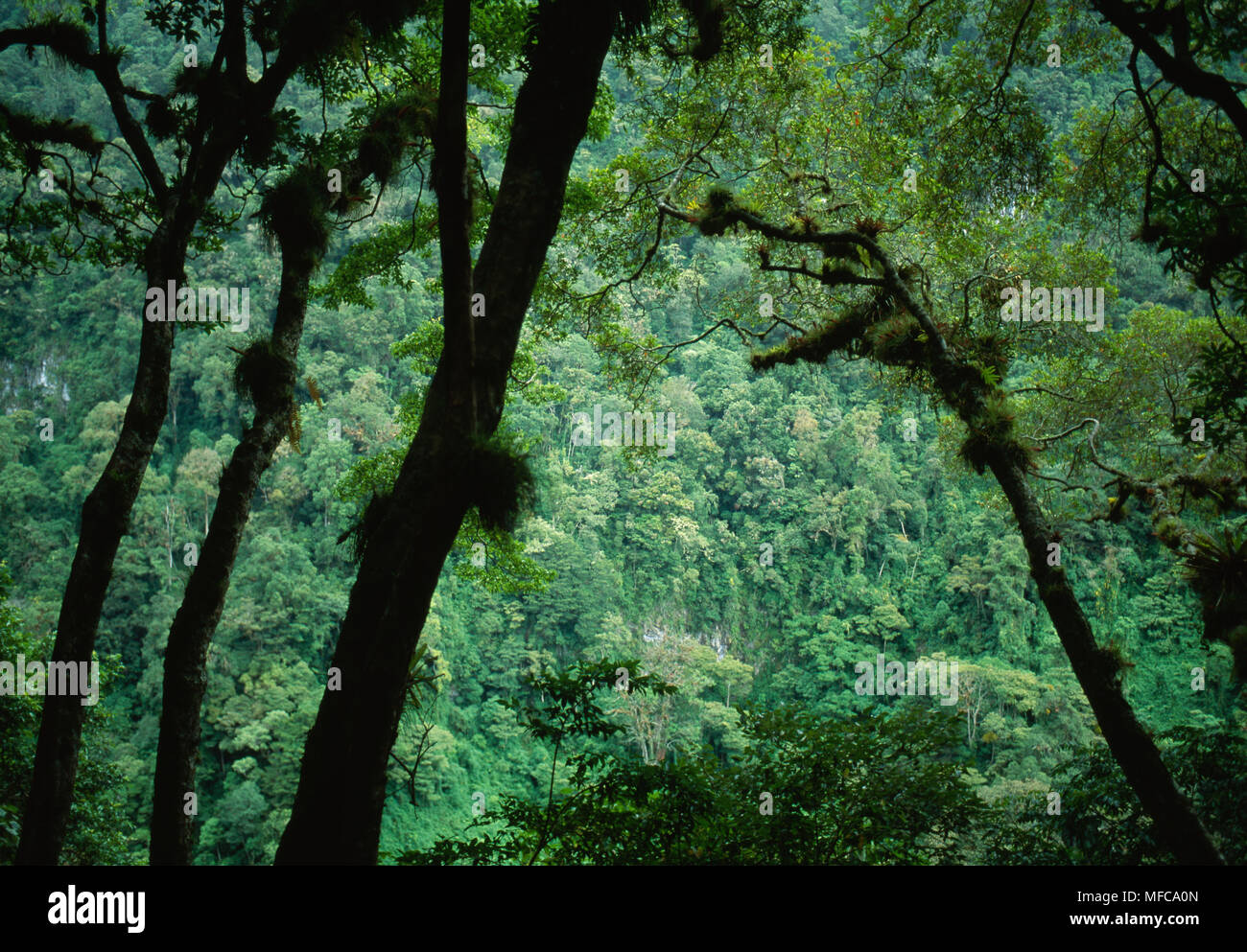 CLOUDFOREST   Volcan Baru National Park,  Panama, Central America - Stock Image