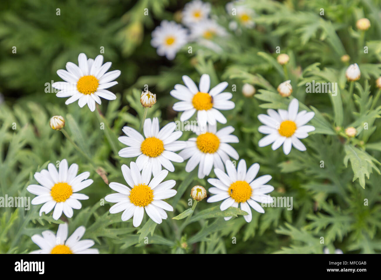 Flower And Green Leaf Background In Garden At Sunny Summer Or Spring