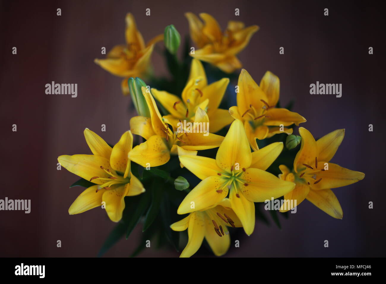 Bouquet of bright yellow flowers of lilies on a dark background bouquet of bright yellow flowers of lilies on a dark background izmirmasajfo