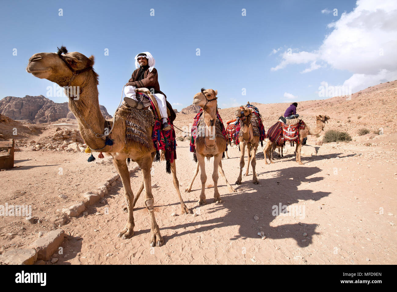 Portrait of a wealthy Bedouin with his camels in a desert - Stock Image