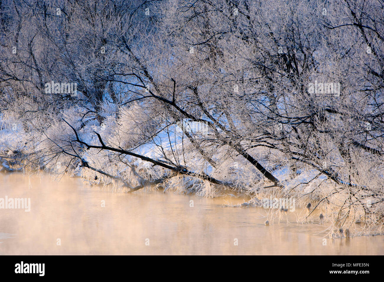 Frost on trees along river, Japan. - Stock Image