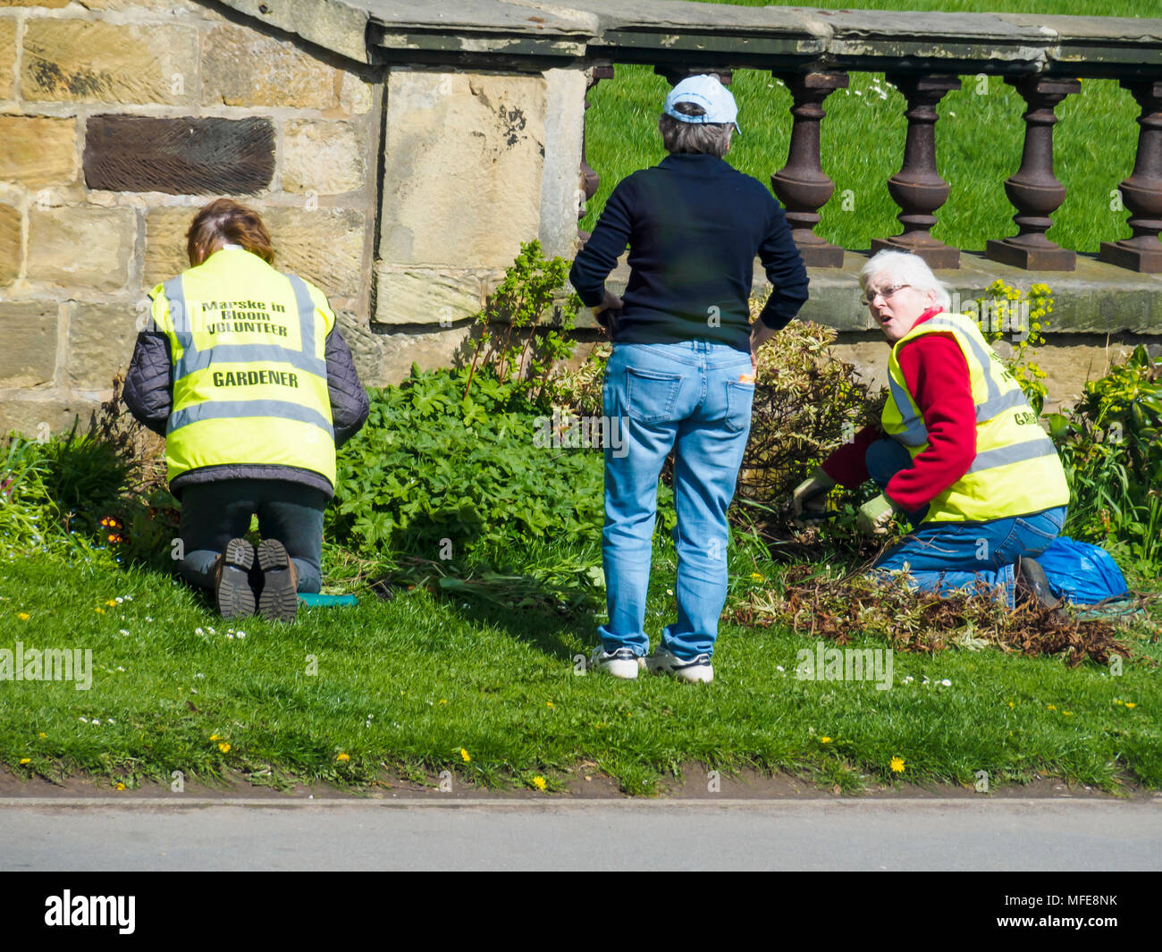 Volunteer gardeners working on a Community garden in North Yorkshire prior to the judging of the Annual Northumbria in Bloom competition - Stock Image