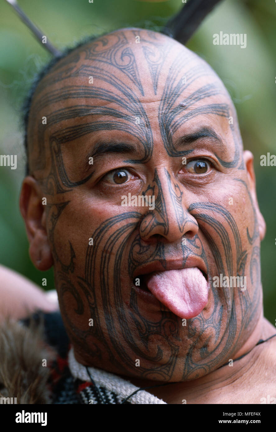 2649c46c1 MAORI WITH TONGUE OUT with traditional facial tattoo (moko) and authentic  costume, New