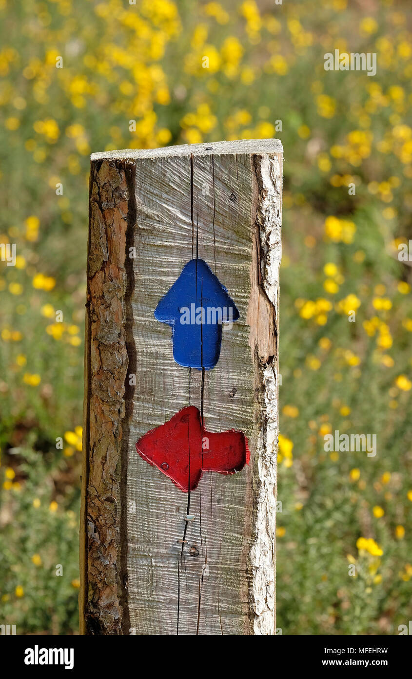 blue and red directional arrows on wooden footpath sign, norfolk, england - Stock Image