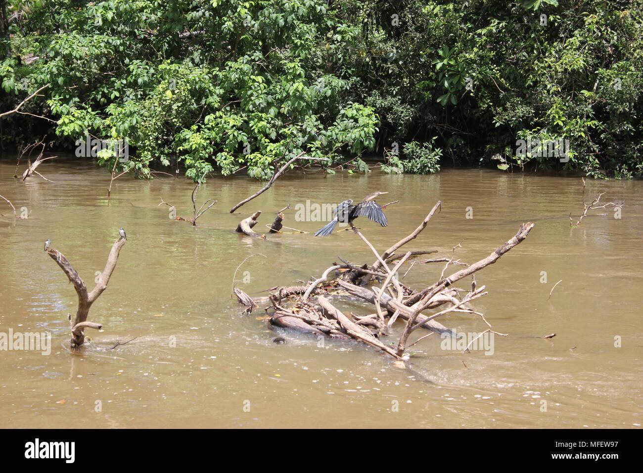 Caño Negro Wildlife Refuge, Alajuela Province, Costa Rica - Stock Image
