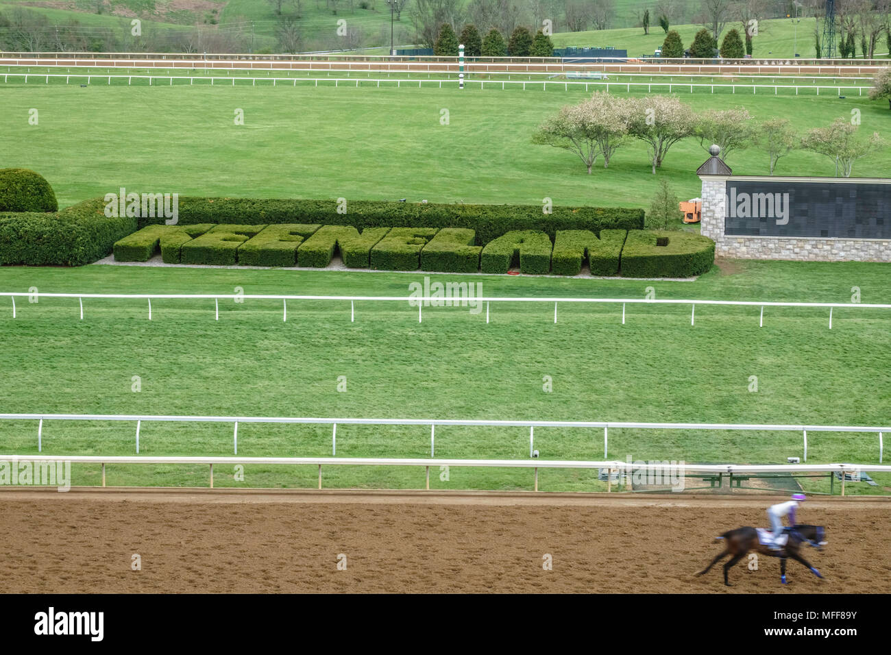 LEXINGTON, KY/USA - APRIL 19, 2018: At a morning workout at Keeneland Race Course, a rider and thoroughbred (lower right) pass by landmark topiary of  - Stock Image