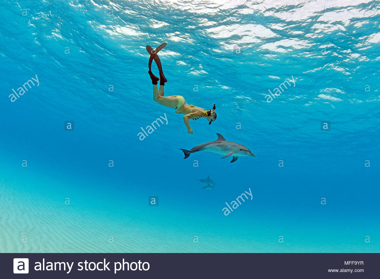 Snorkeler and young Atlantic spotted dolphin (Stenella frontalis), Grand Bahama, Bahamas - Stock Image