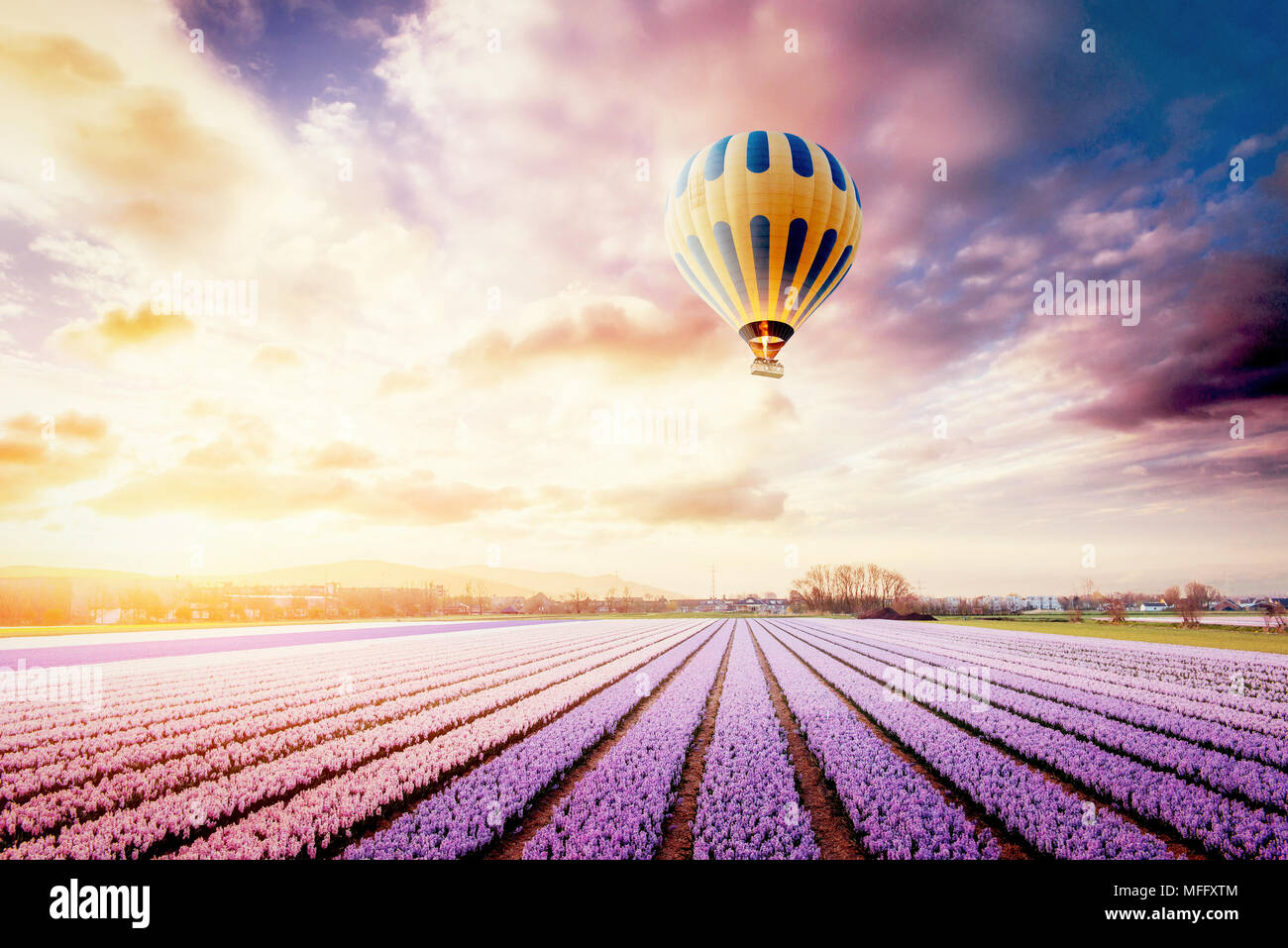 A beautiful field of flowers in holland balloons in the background a beautiful field of flowers in holland balloons in the background fantastic spring event izmirmasajfo