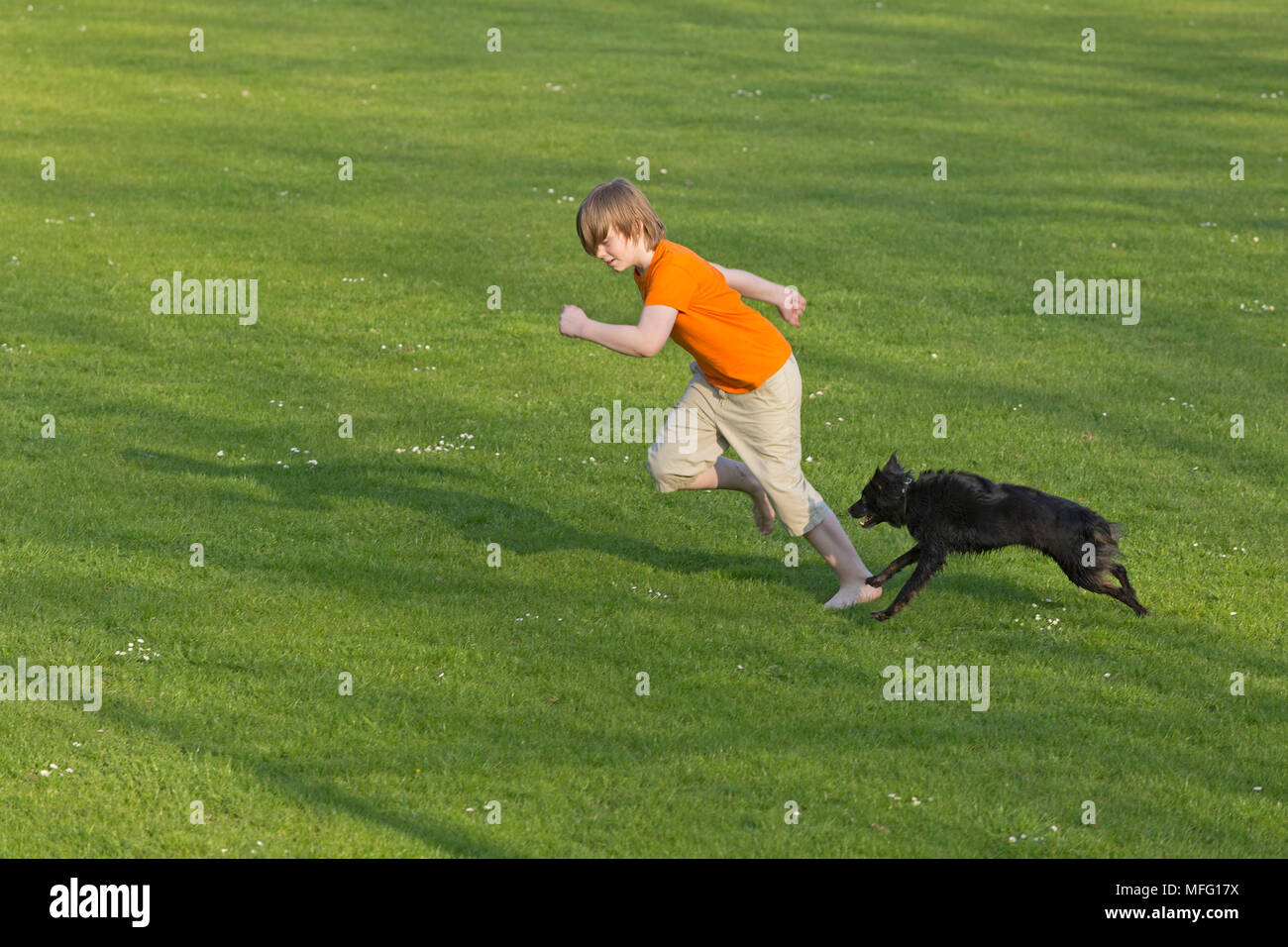 boy running with dog across lawn - Stock Image