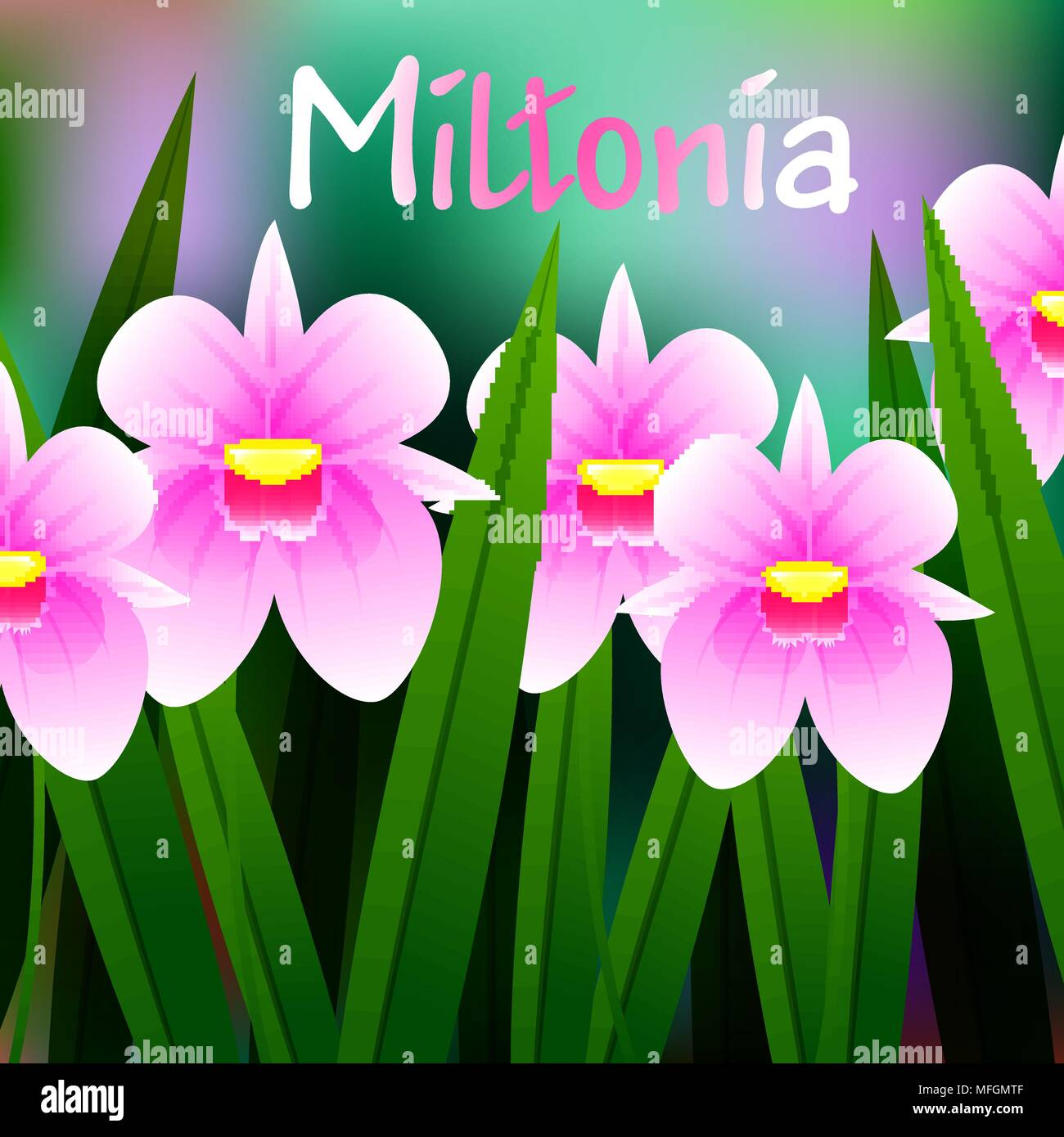 Beautiful Flower, Illustration of Orchid Miltonia with Green Leaves. Vector illustration - Stock Vector