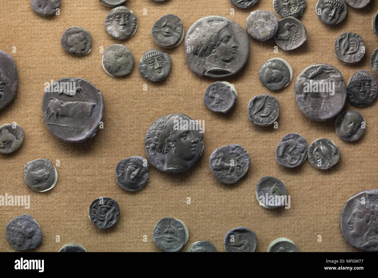 Ancient Greek silver coins (didrachm and others) from the treasure found in Cales dated from the last decade of the 4th century BC on display in the National Archaeological Museum (Museo Archeologico Nazionale di Napoli) in Naples, Campania, Italy. - Stock Image