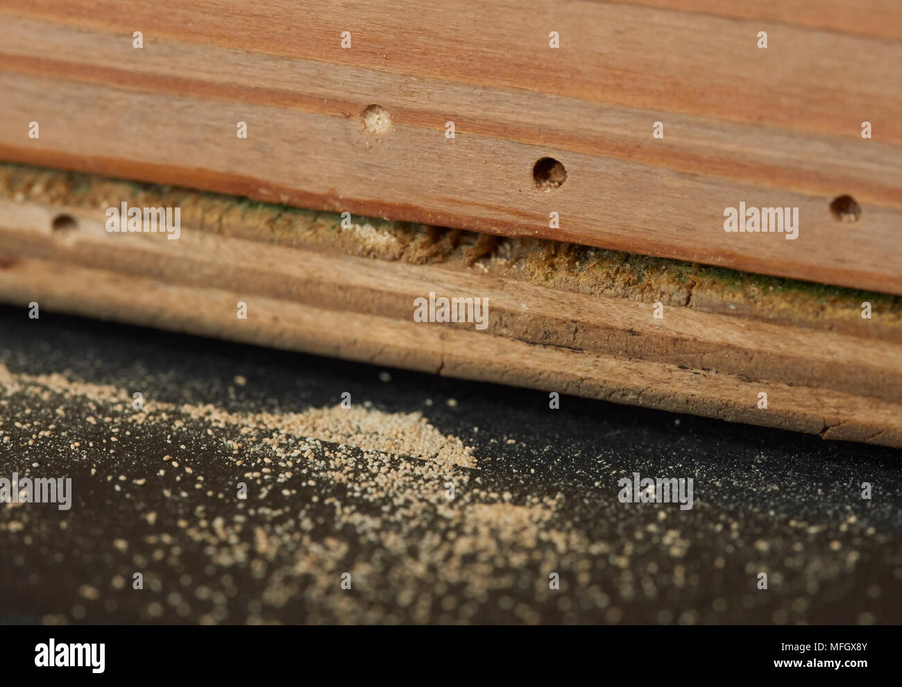 Sign of WOODWORM or FURNITURE BEETLE (Anobium punctatum) (note the 1/8 - Woodworm Holes Stock Photos & Woodworm Holes Stock Images - Alamy