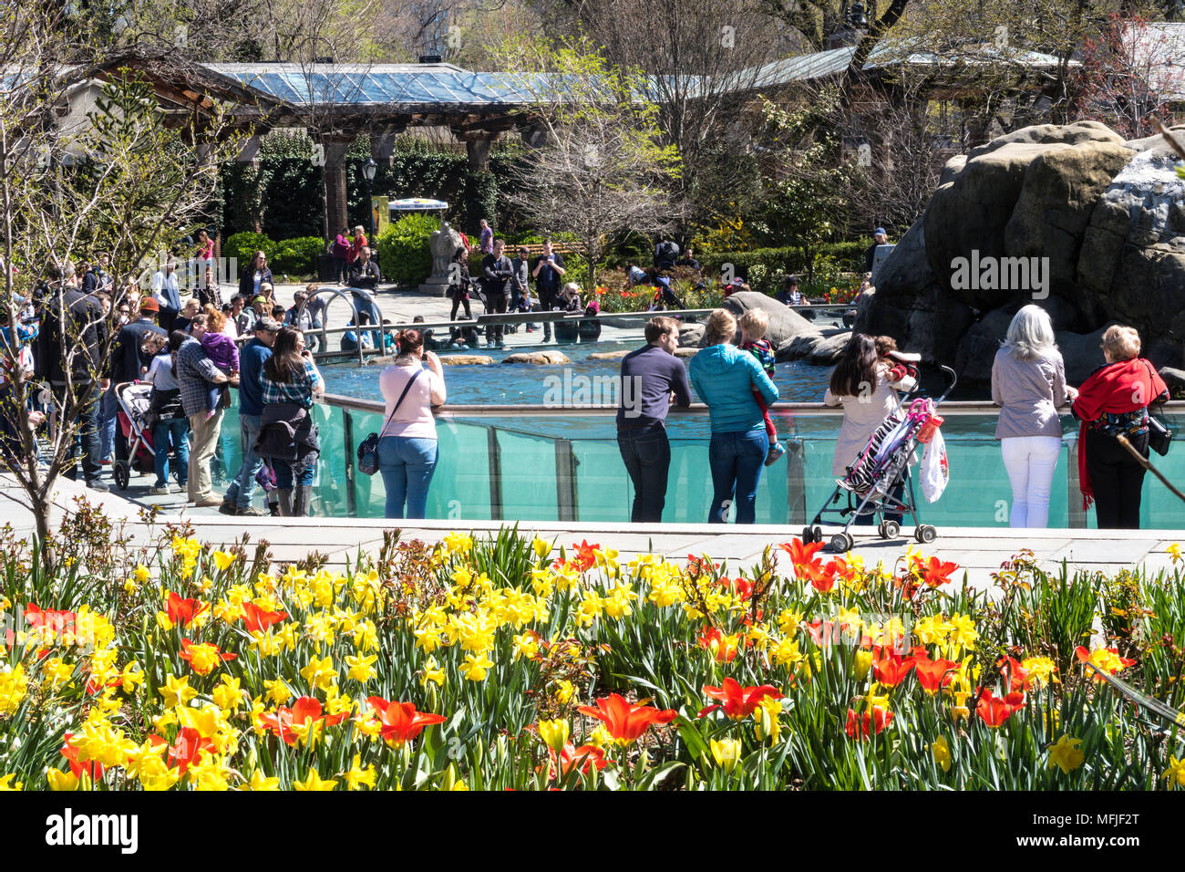 Parents and Children Enjoying the Sea Lion Pool in Central Park Zoo, NYC, USA Stock Photo