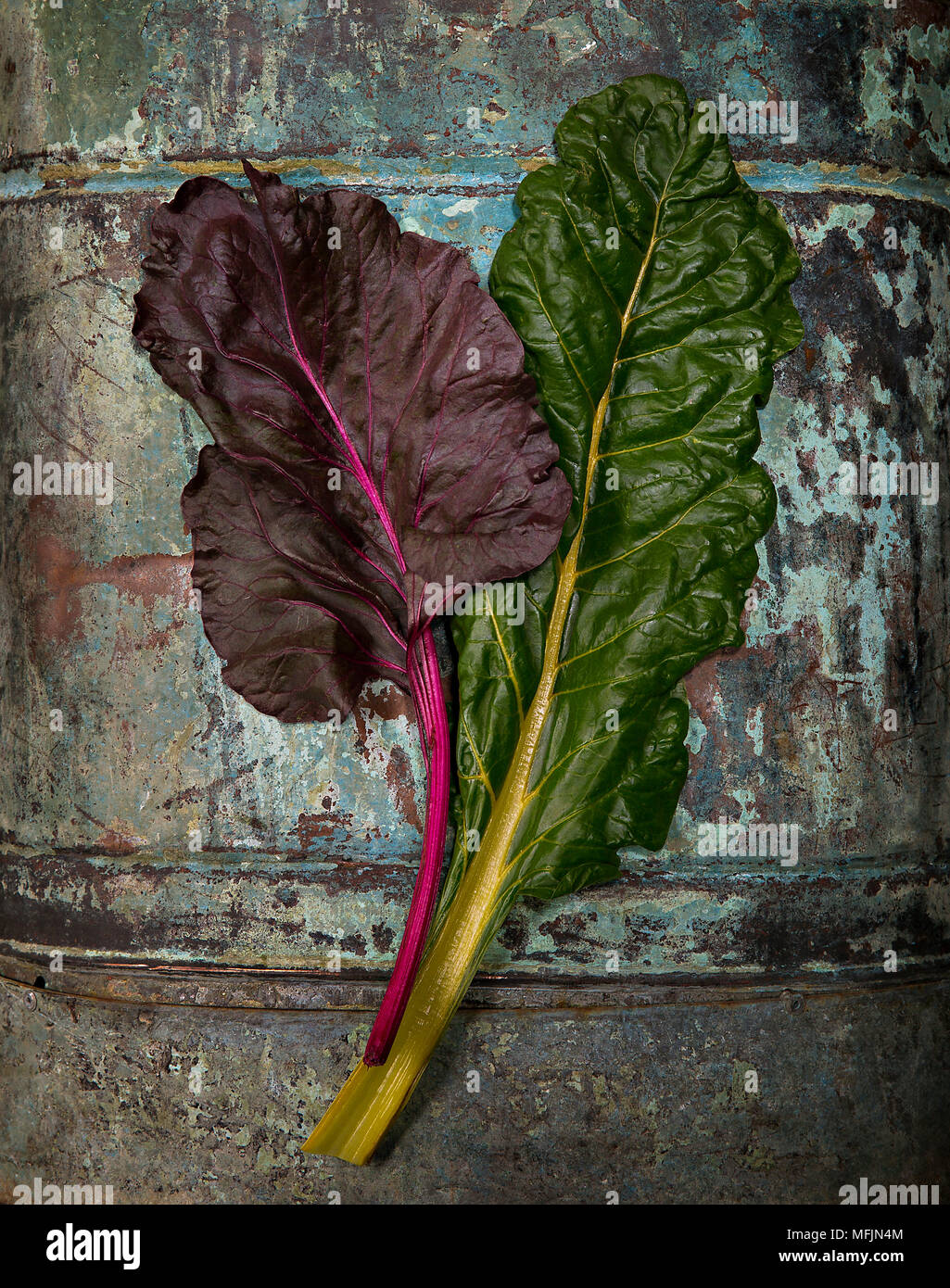 Studio still life of Swiss Chard on a barn wood background. - Stock Image