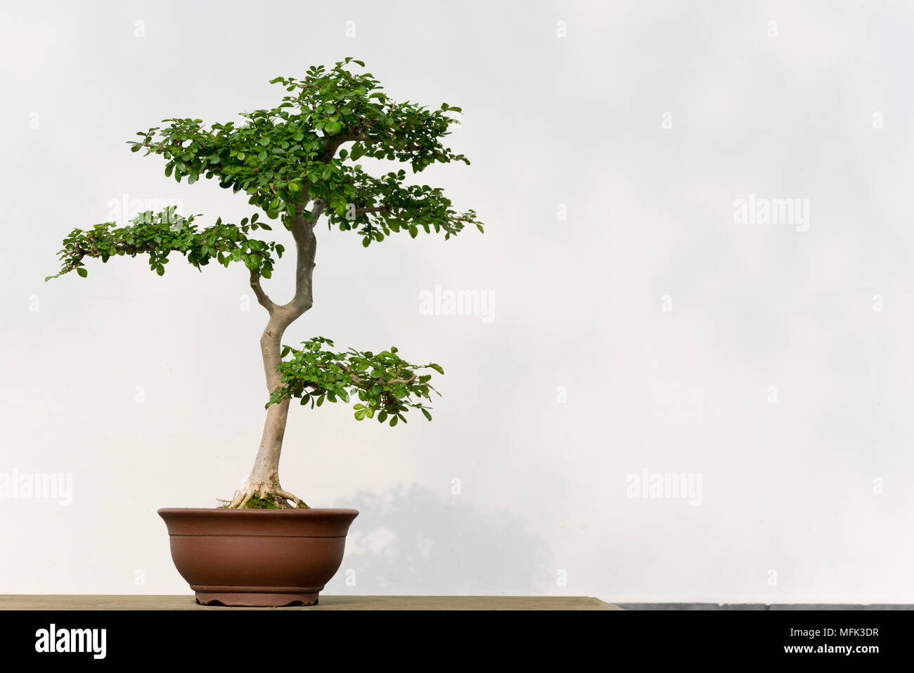 Chengdu China 26th Apr 2018 April What Does Wiring A Bonsai Do Pot Of Plant Can Be Seen In Southwest Chinas Sichuan Province
