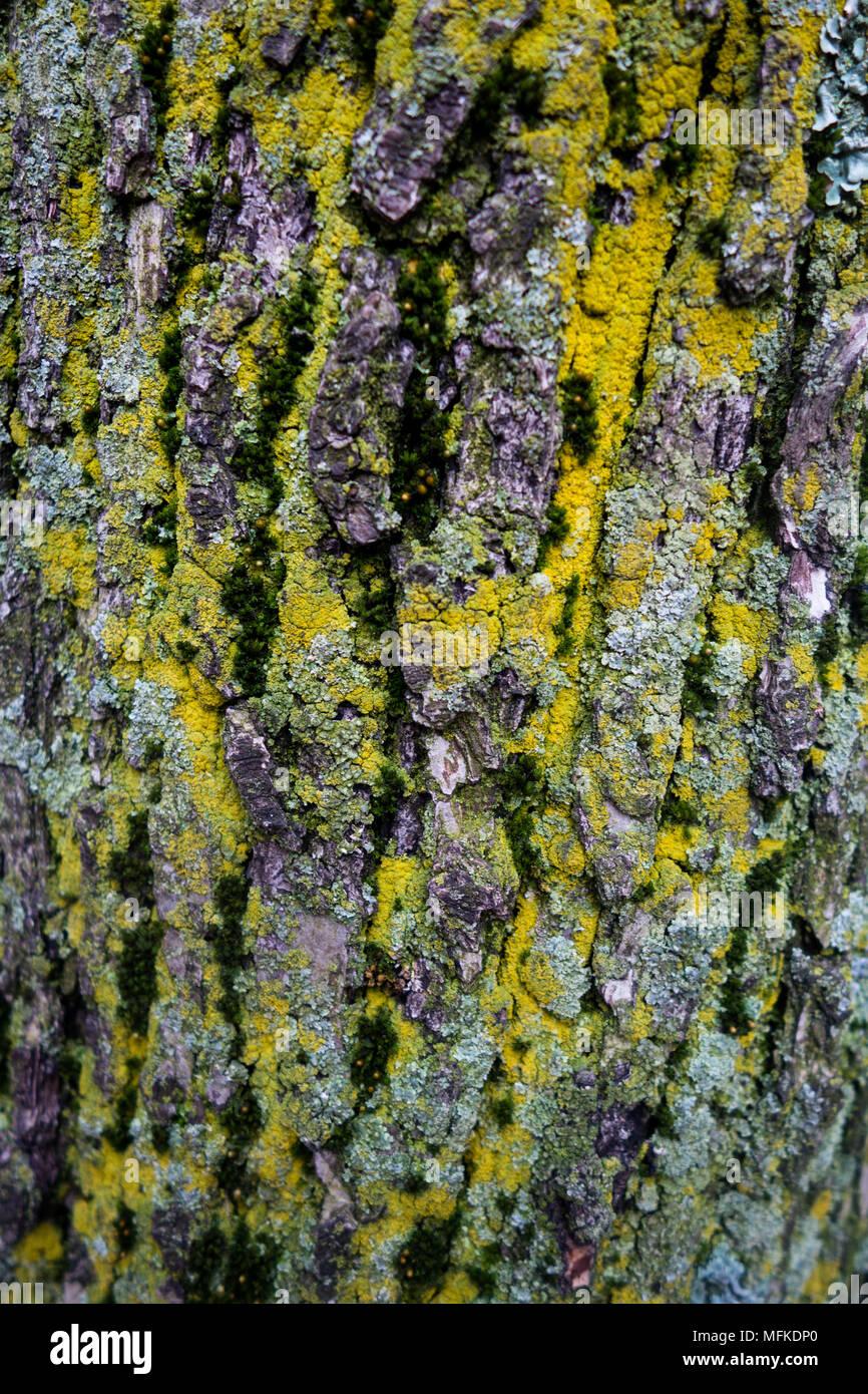 Tree With Interesting Bark Stock Photos & Tree With Interesting Bark ...