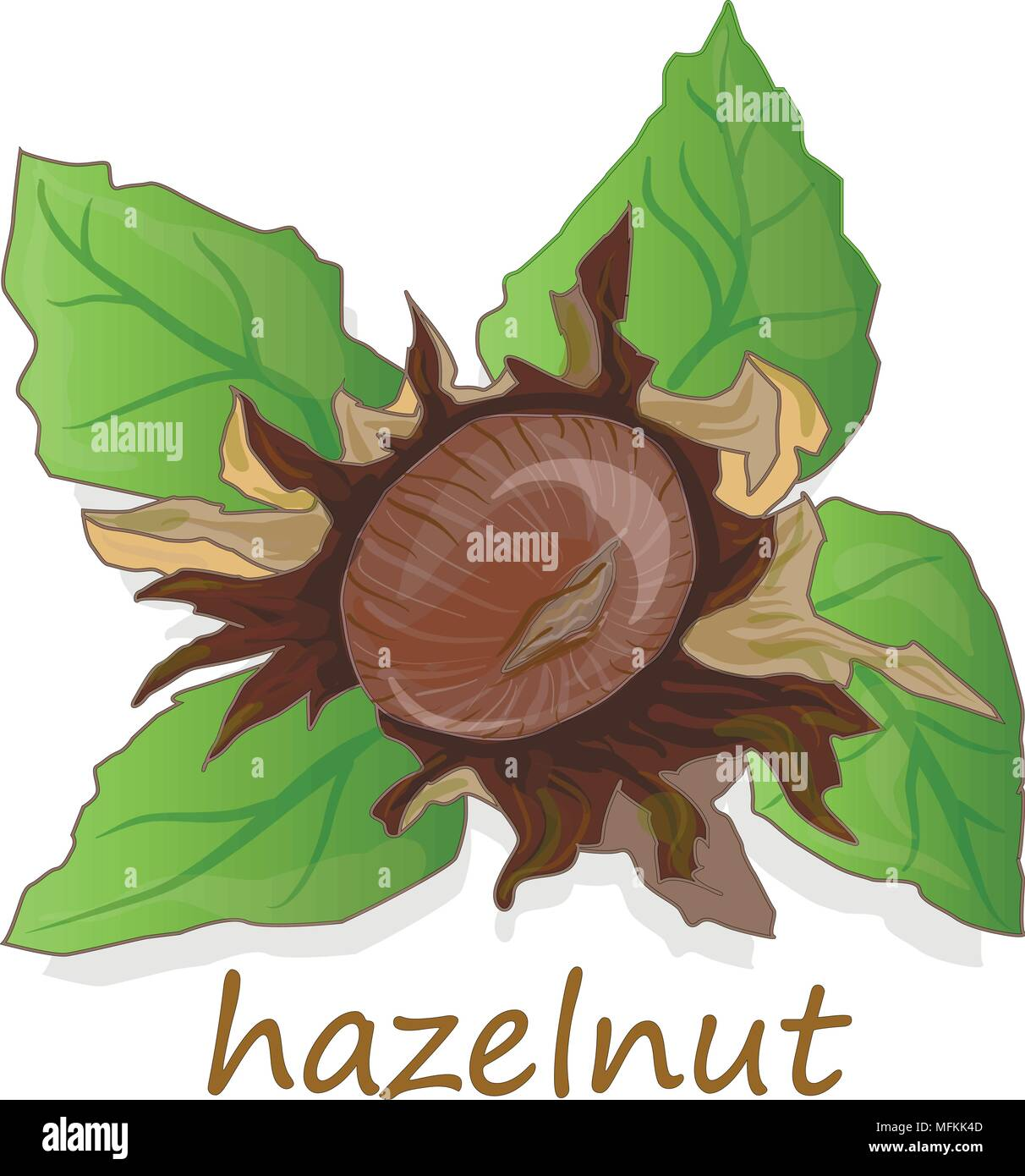 Closeup Of Hazelnuts Isolated On The White Background