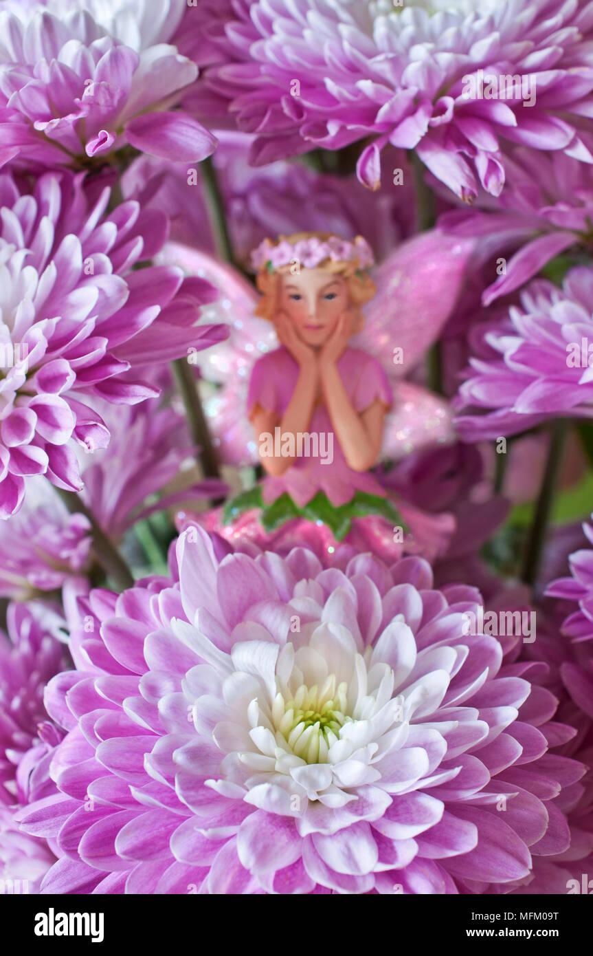 Flower Fairy Hidden Behind Aster Flowers In Garden Stock Photo