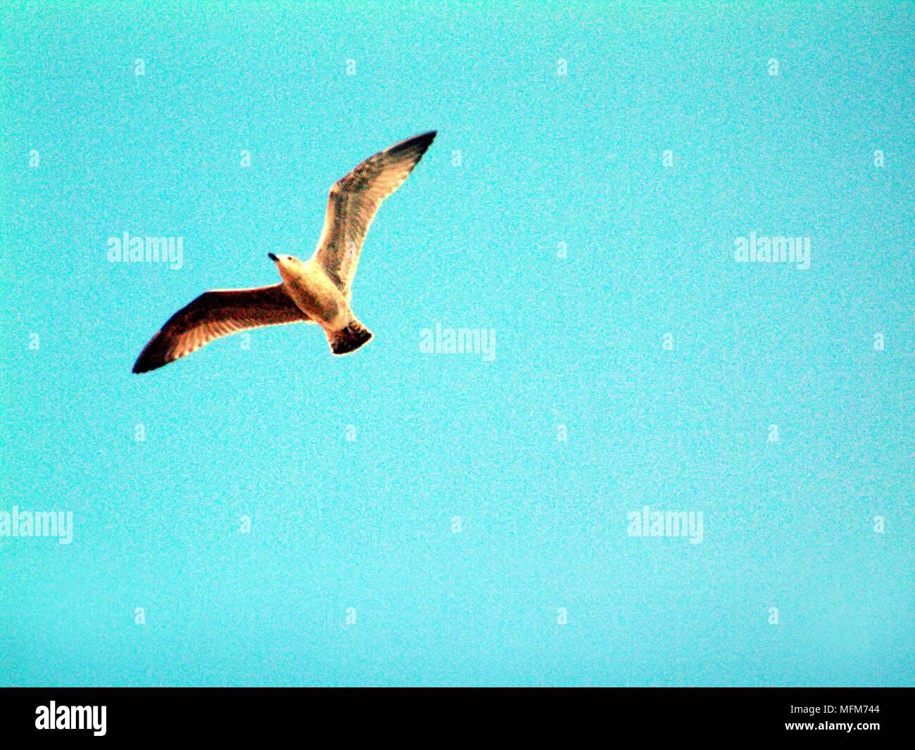 Lonely Brooding Vigil Of Solitary Heron >> Loner Bird Stock Photos Loner Bird Stock Images Alamy