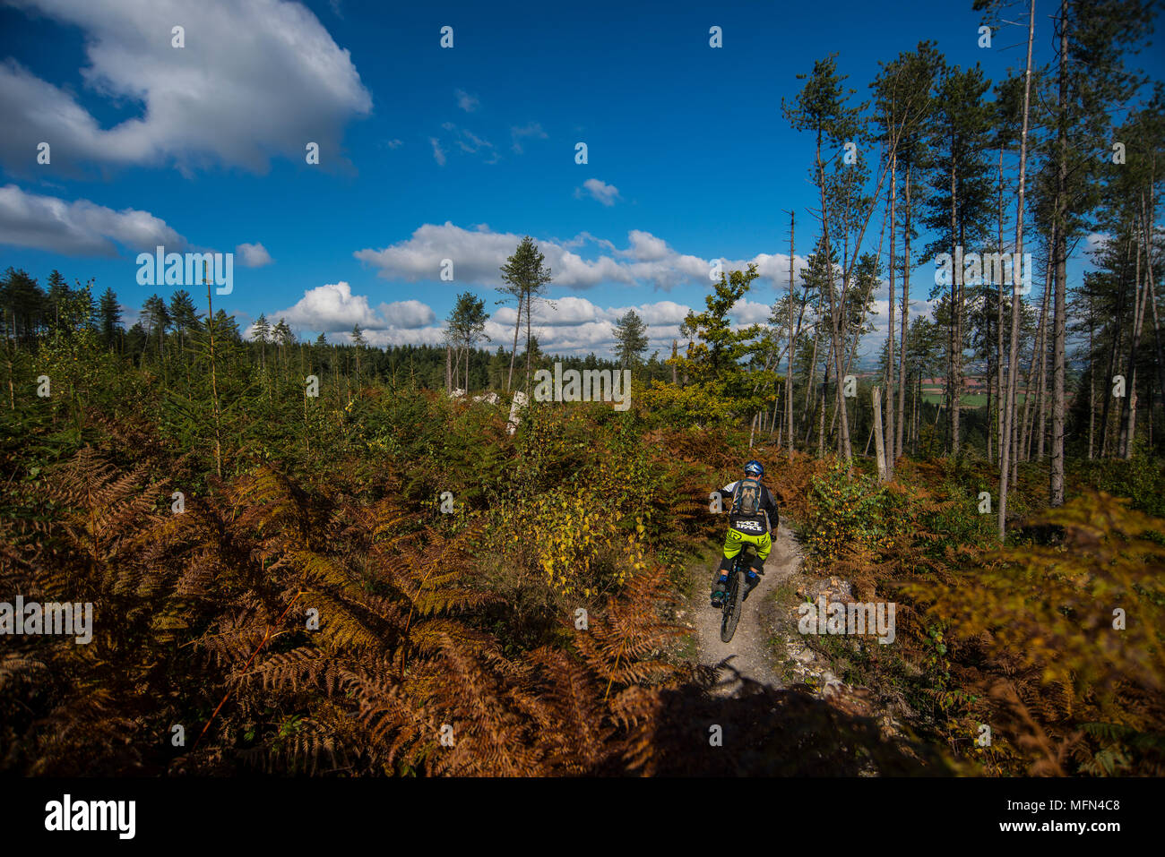 Mountain bikers ride a trail at Haldon Forest near Exeter in Devon. Stock Photo