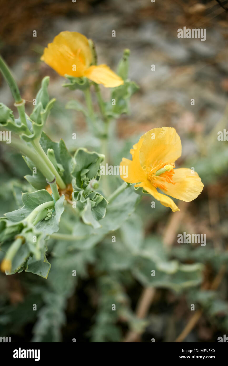 Natural Background Of Small Yellow Flowers With Soft Focus Stock