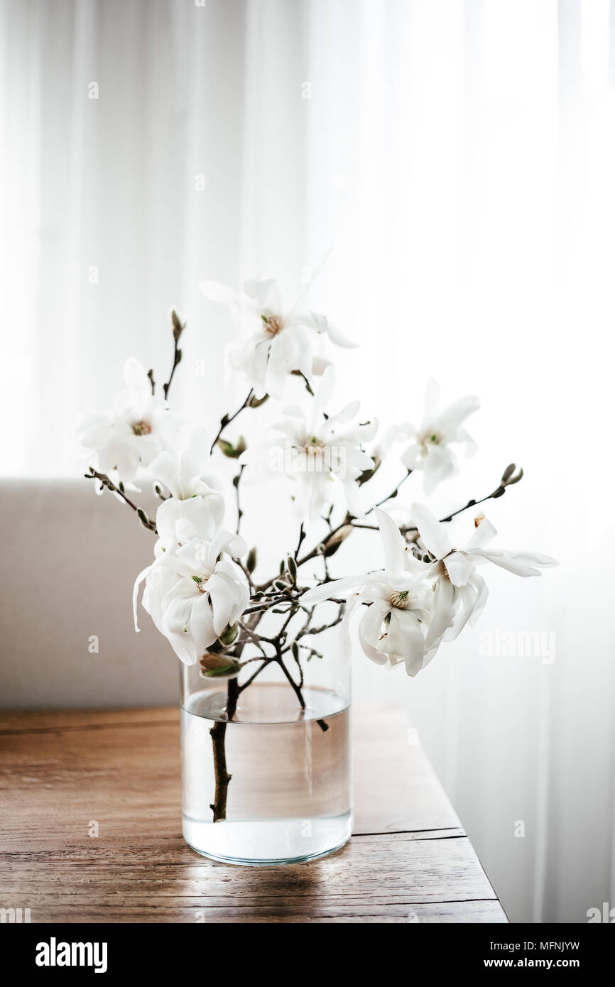 White Magnolia Twigs Freshly Cut From Magnolia Tree Glass Vase Standing On Wooden Table With White Magnolia Flowers First Spring Blossom Nature Awa Stock Photo Alamy