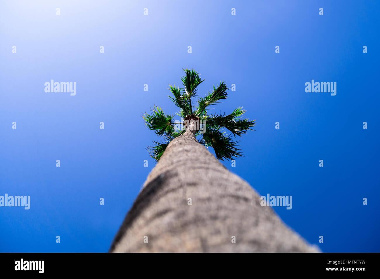 Palm on a blue sky - Stock Image
