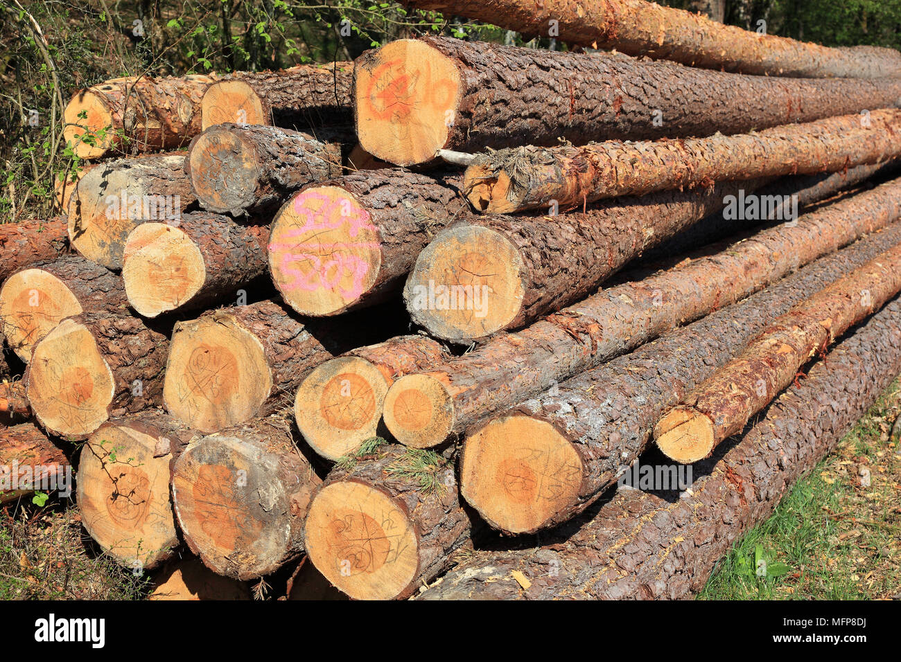 Logs In The Forest, Long Wood, Wood Storage