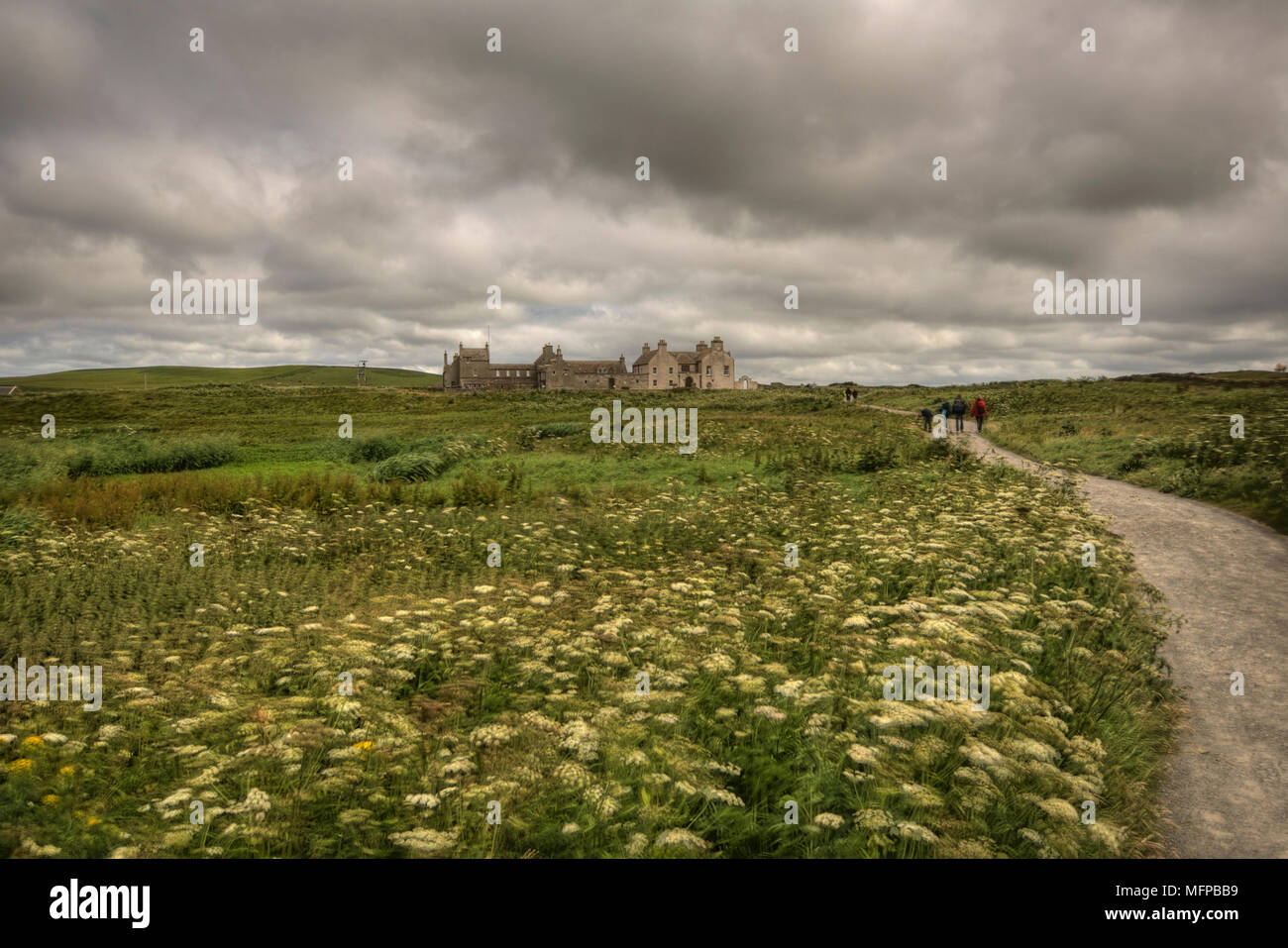 Field of flowers with footpath leading to Skaill House, a mansion at the westside of Mainland, Orkney, near Neolithic village of Skara Brae. Stock Photo
