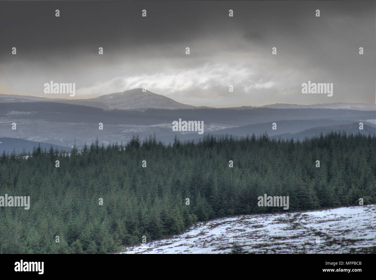 View over forest of conifers in west direction towards snowy peak of Ben Aigan. - Stock Image