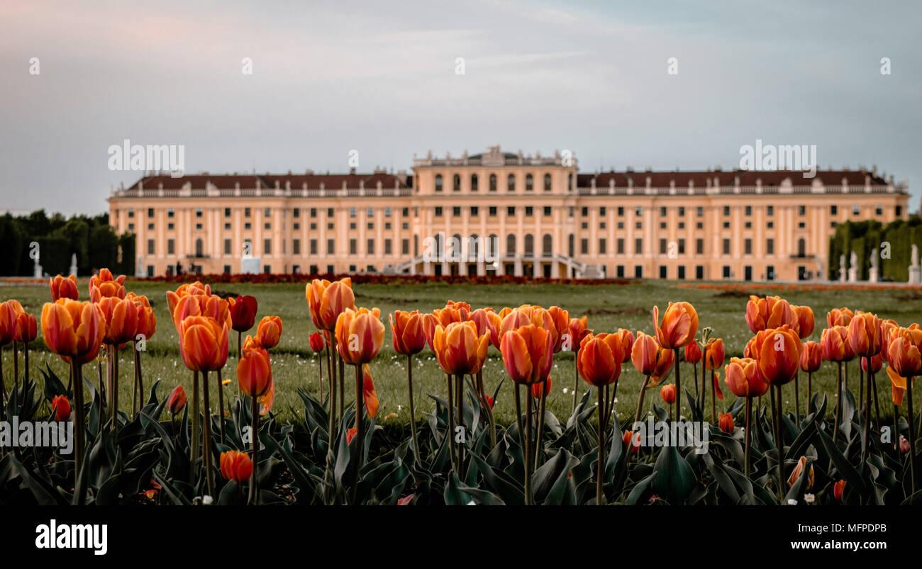 Schonbrunn - Stock Image