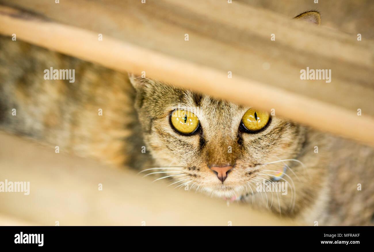 Frightened domestic cat hiding itself - Stock Image