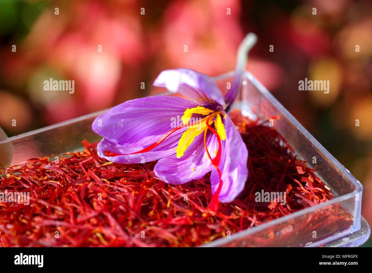 Saffron Flower Stock Photo 181841406 Alamy